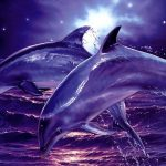 Dolphin as Your Spirit Guide